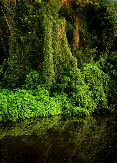z Kudzu on the Ogeechee Canal.jpg