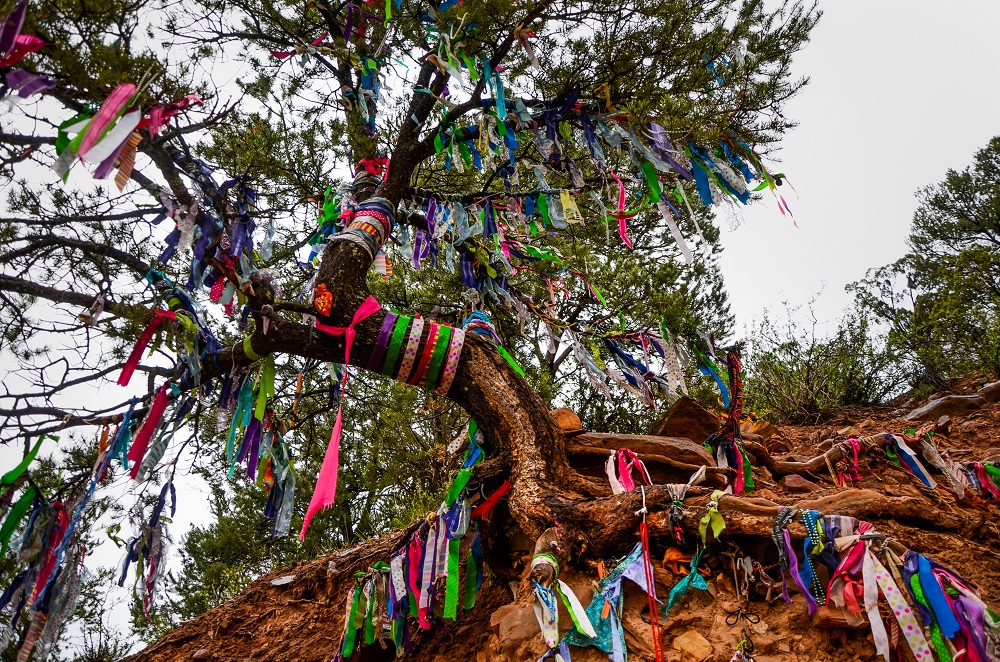 Annie's Wishing Tree is a landmark along the trail to the Pioneer Cemetery.