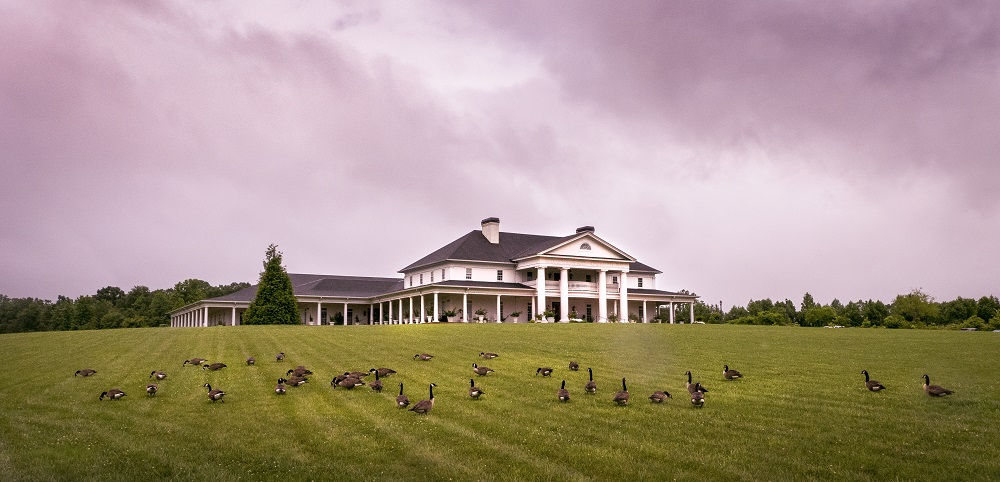 Canadian Geese on the lawn of Babyland General.