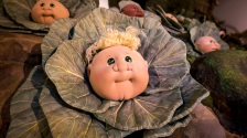 A Kid in a cabbage.