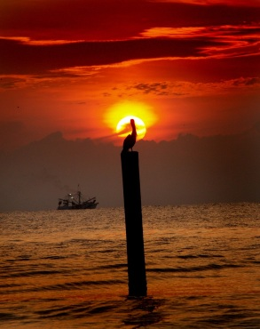 Pelican and Shrimp Boat at Sunrise